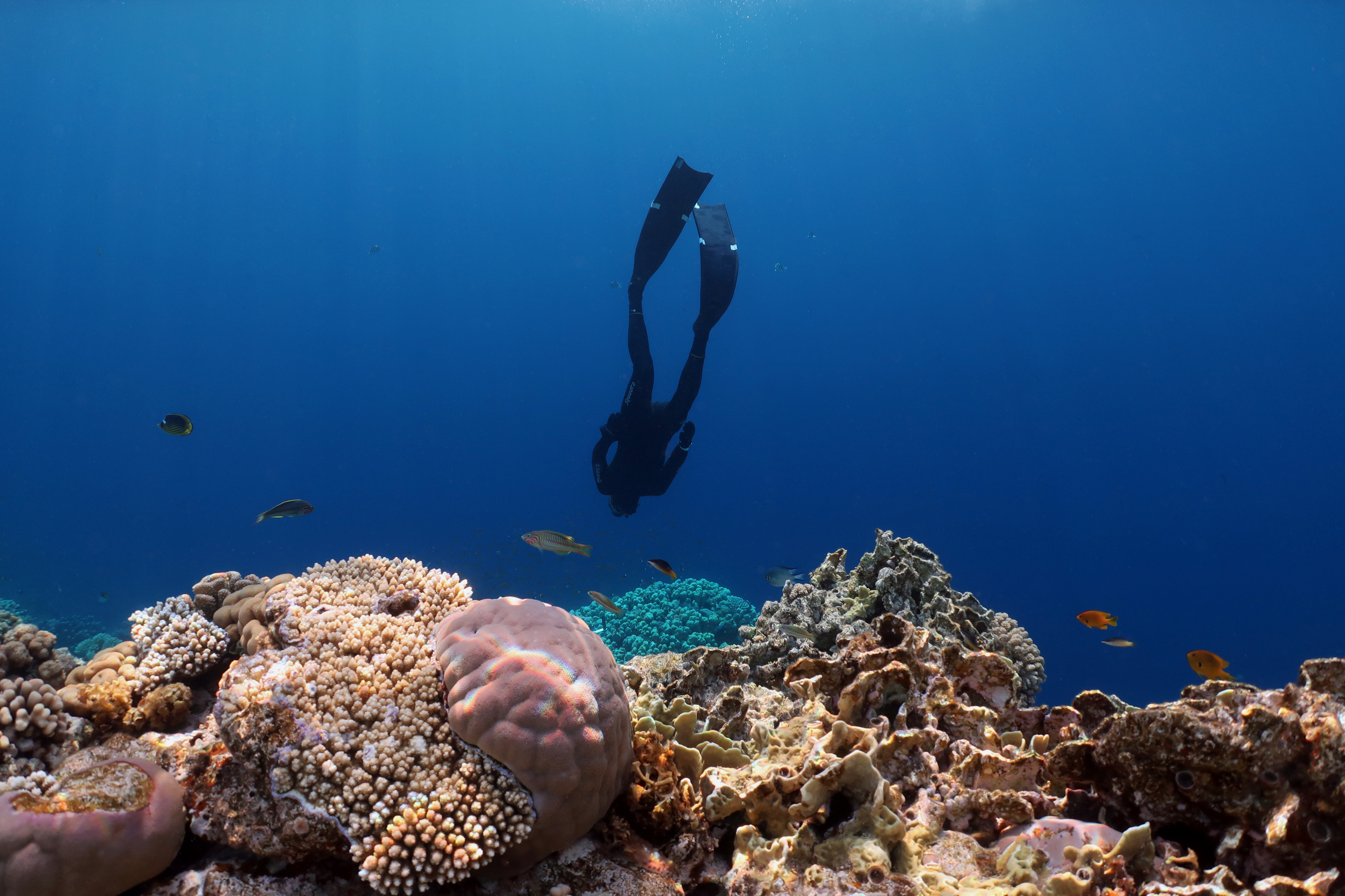 United Nations Environment Assembly 4 resolution on Coral Reefs