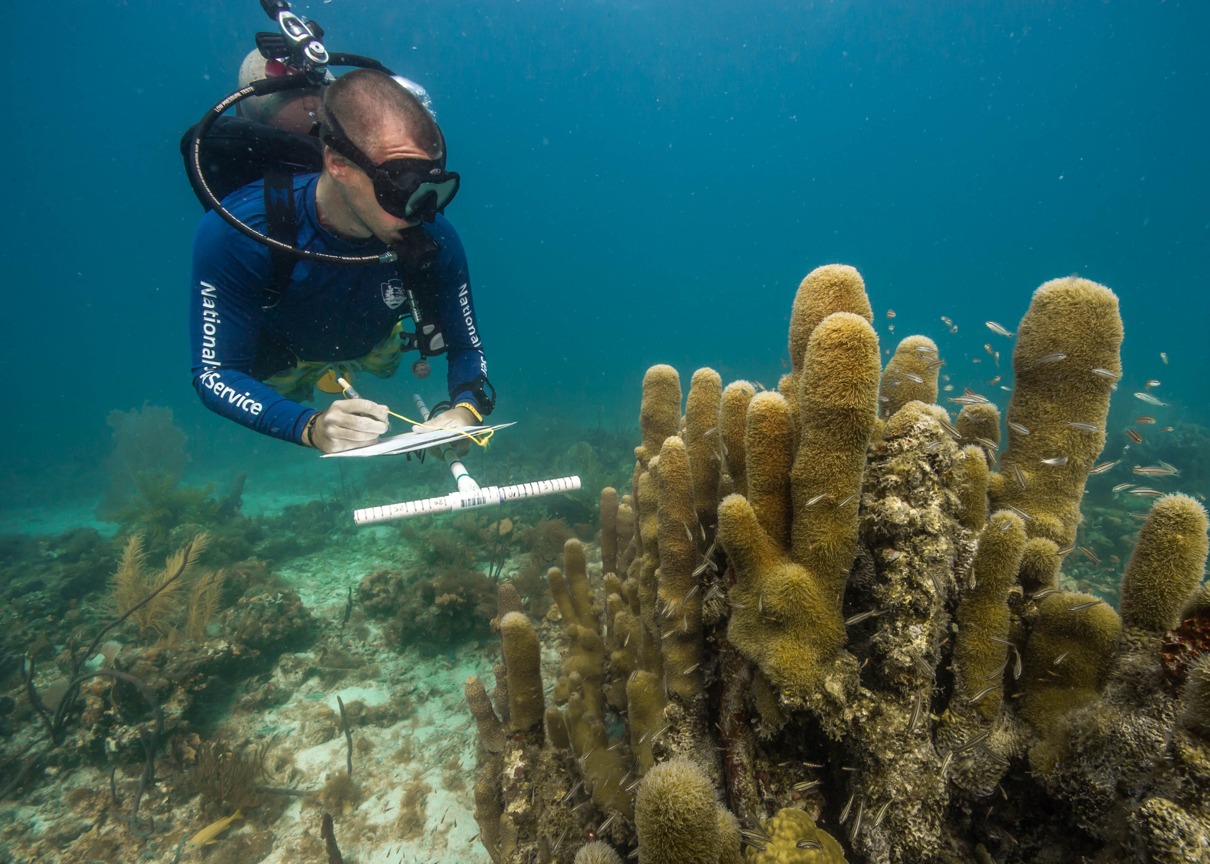 Call for data for the next GCRMN Status of Coral Reefs of the World