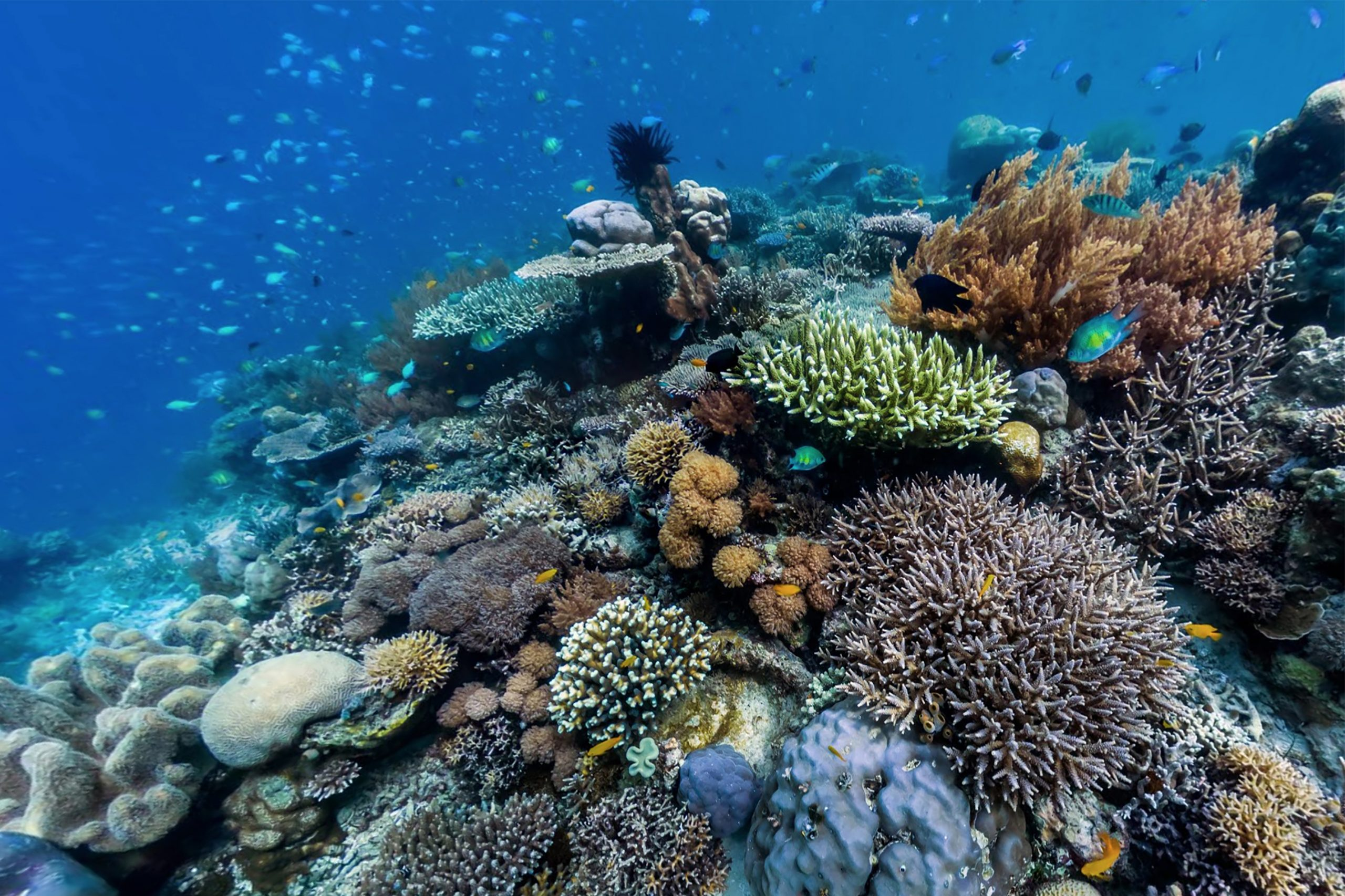 Nature Foundation conducts annual scientific assessments of the Islands coral reefs using GCRMN standards
